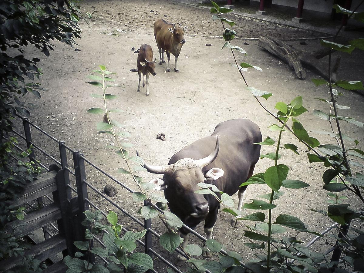 zoo_berlin_1200x900_02